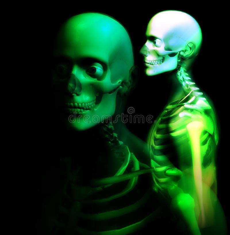 Man Bone 26 royalty free stock photo
