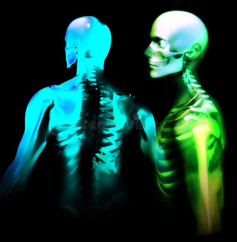 Download Man Bone 27 stock illustration. Image of anatomical, illustration - 1212042