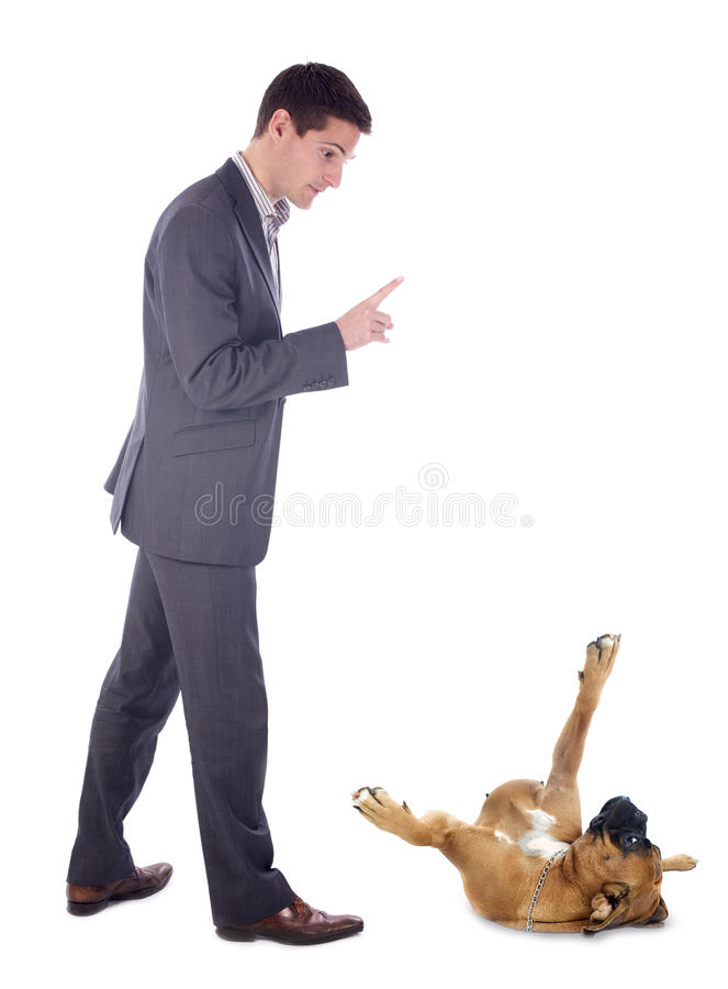 Man and boxer stock images