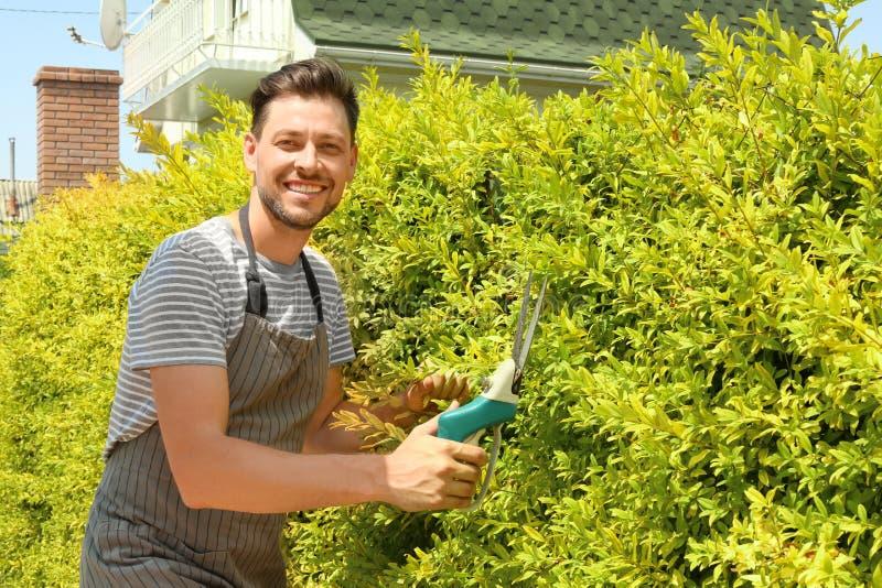 Man brämbuskar i trädgård på solig dag royaltyfria bilder