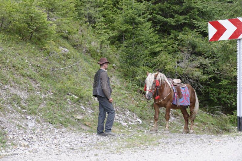 Man bredvid häst royaltyfria foton
