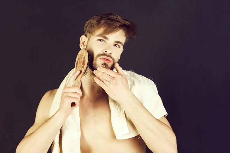 Man brushing beard with brush. Man or bearded macho with stylish healthy hair, haircut and bathing towel on neck brushing beard with brush on grey background stock photography