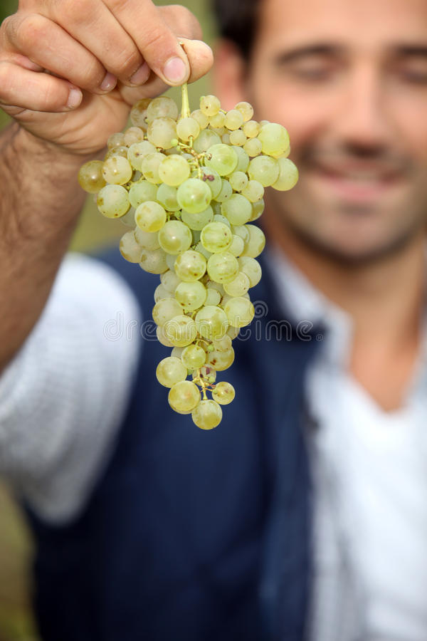 Download Man with bunch of grapes stock photo. Image of fresh - 31989642
