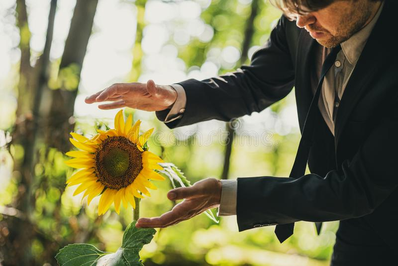 Man in business suit holding his hands around sunflower royalty free stock photos