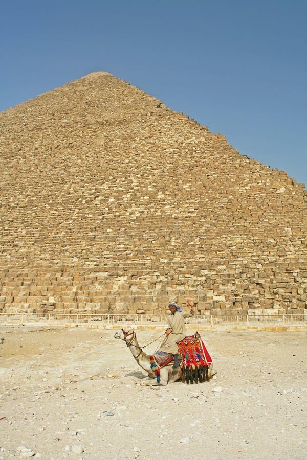 Download Man on camel near pyramids stock photo. Image of destination - 12765260