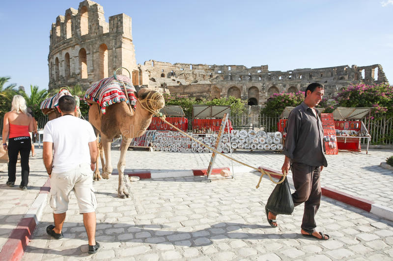 Man with camels in El Jem. EL JEM, TUNISIA : SEPTEMBER 17th, 2012 : Man with camels walking around amphitheater in El Jem, Tunisia stock image
