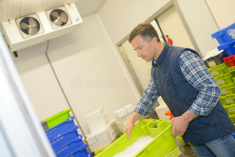 Man carries basket fresh fish royalty free stock images