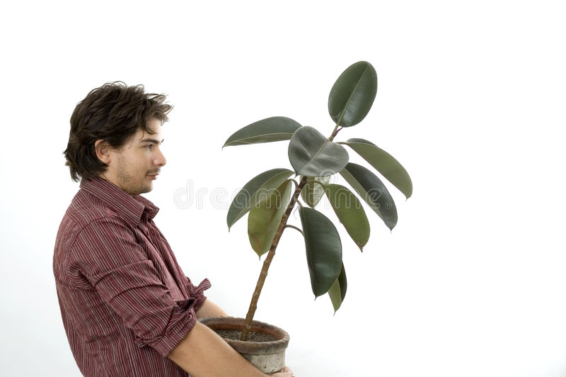 Man carriying a plant stock image