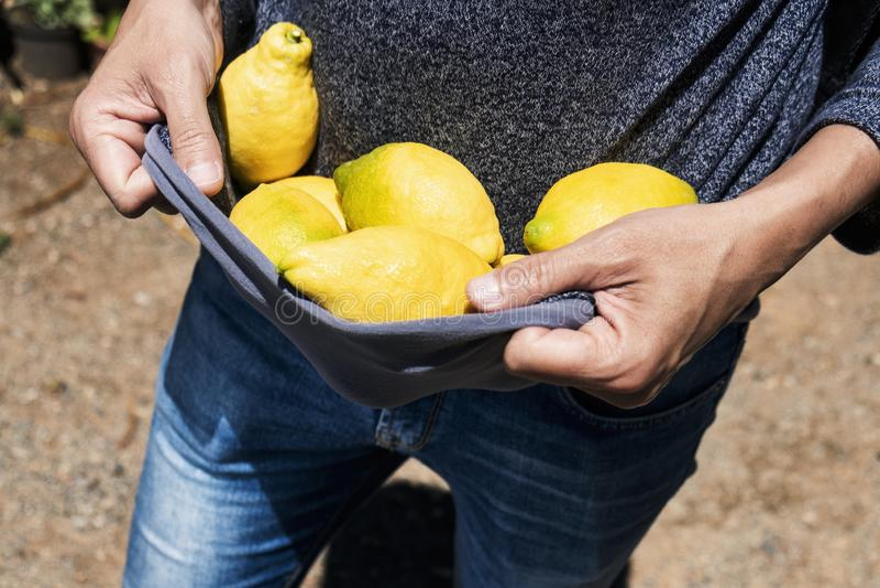 Man carrying lemons in his sweater stock image