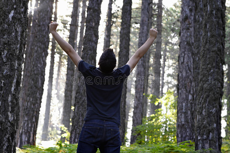 Man celebrating with arms lifted in forest. Behind view of a man standing in the forest celebrating with arms lifted high royalty free stock photography