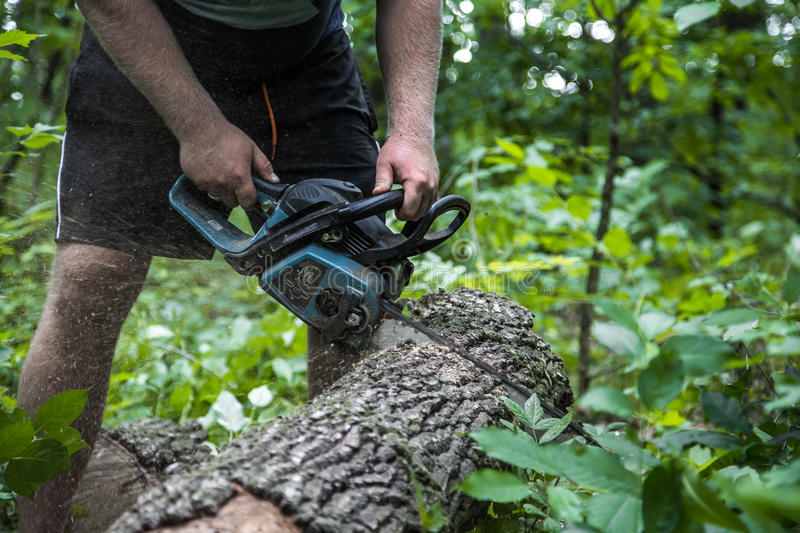 A man with a chainsaw cuts the tree. A man with a chainsaw cuts a tree in the forest ,closeup royalty free stock images