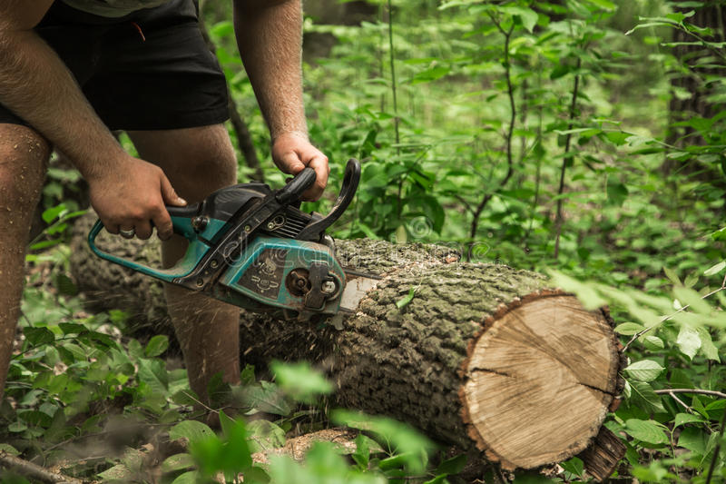 A man with a chainsaw cuts the tree. A man with a chainsaw cuts a tree in the forest ,closeup stock photography
