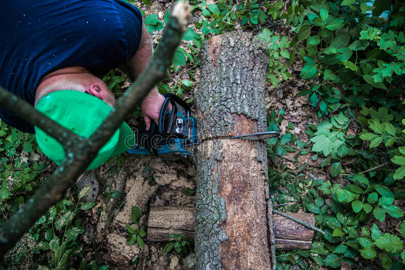 A man with a chainsaw cuts the tree. A man with a chainsaw cuts a tree in the forest ,closeup royalty free stock photo