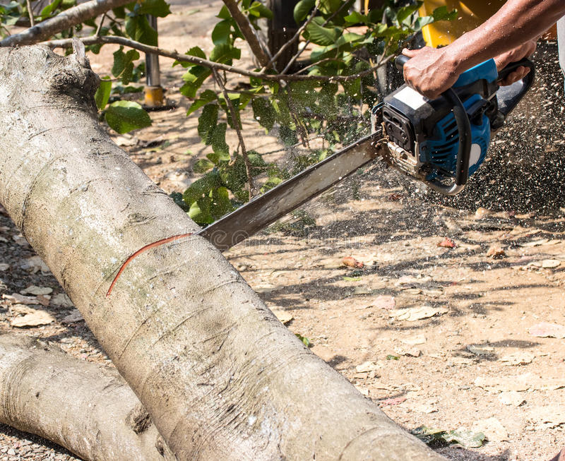 Man with chainsaw cutting tree. Man with chainsaw cutting the tree royalty free stock image