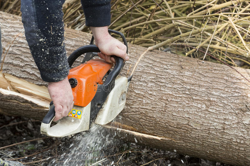 Man with chainsaw cutting the tree. Forest outdoor royalty free stock image