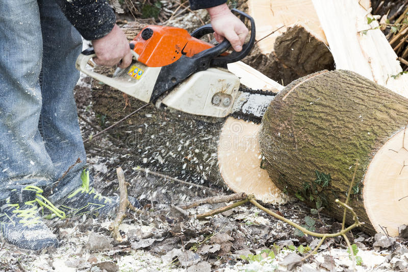 Man with chainsaw cutting the tree. Forest outdoor royalty free stock photography