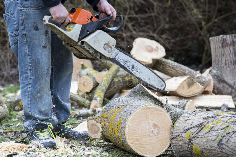 Man with chainsaw cutting the tree. Forest outdoor royalty free stock photo