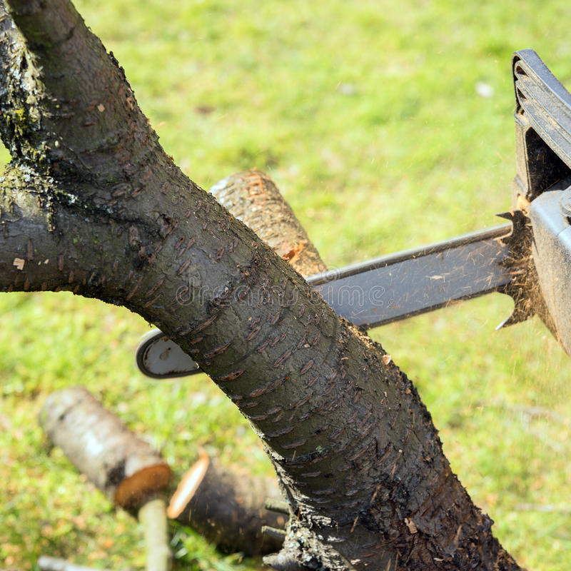 Man with chainsaw cutting the tree. In the garden royalty free stock photography