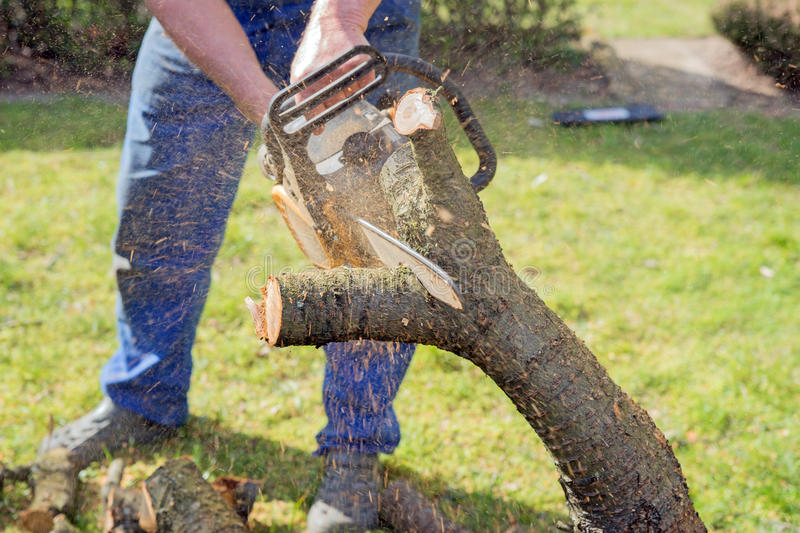 Man with chainsaw cutting the tree. In the garden stock images