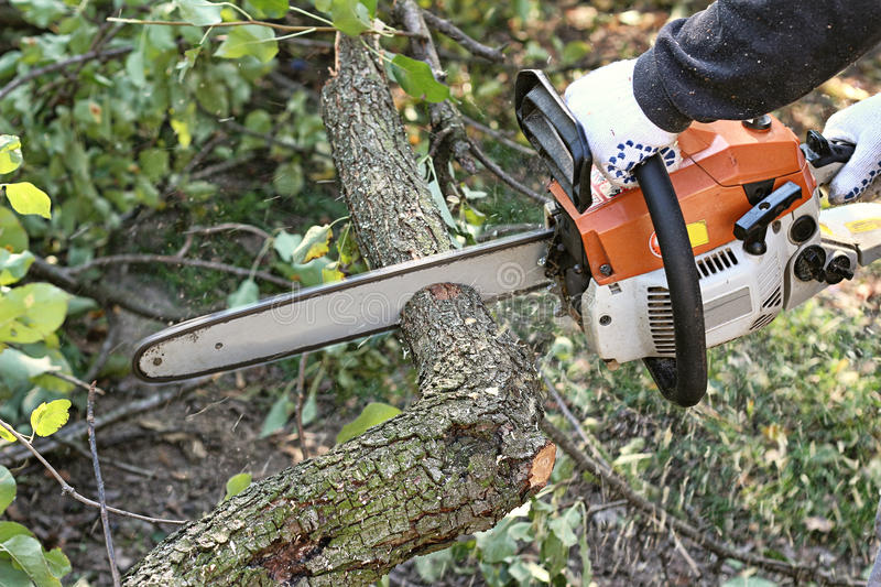 Man with chainsaw cutting the tree. Outdoors stock images