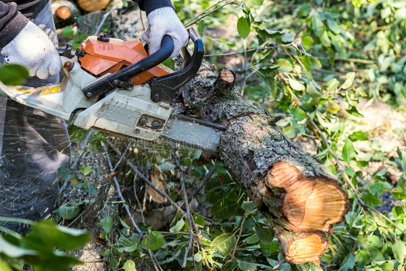 Man with chainsaw cutting the tree. Outdoors royalty free stock photo