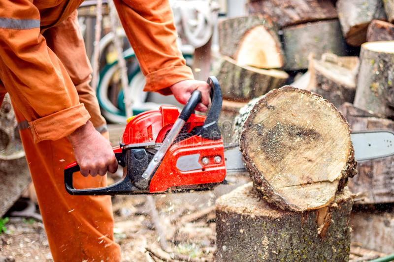 Man with chainsaw cutting the tree. worker in protective gear.  stock photos
