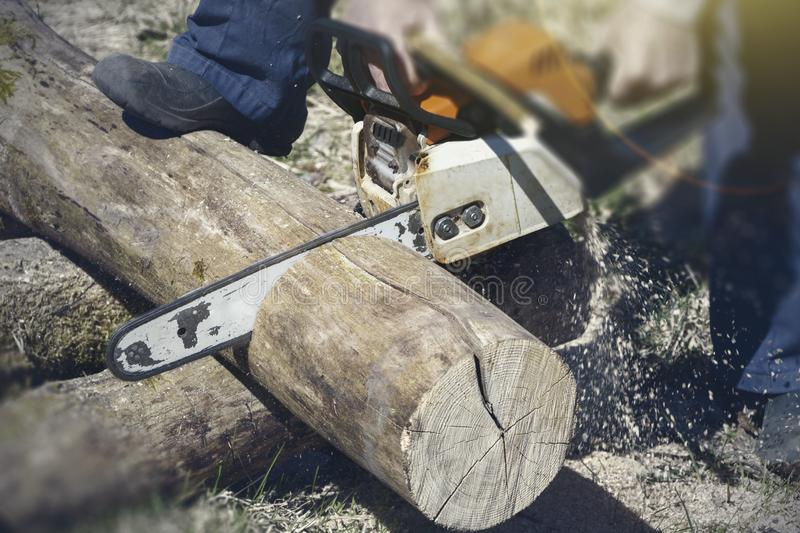 A man with a chainsaw cutting wood. The concept of protection of nature. Firewood royalty free stock photos