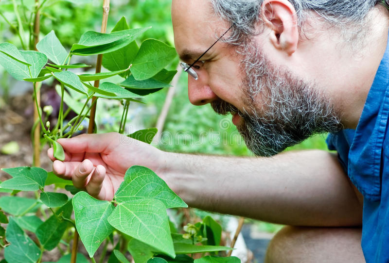 Man checks garden plant with a smile