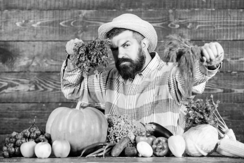 Man chef with rich autumn crop. organic and natural food. happy halloween. harvest festival. bearded mature farmer. Seasonal vitamin food. Useful fruit and stock photography