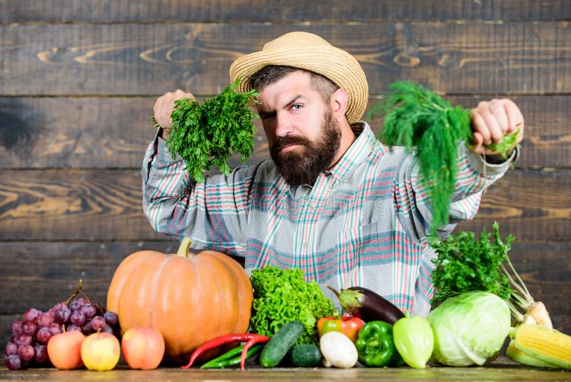 Man chef with rich autumn crop. organic and natural food. happy halloween. harvest festival. bearded mature farmer. Seasonal vitamin food. Useful fruit and royalty free stock image