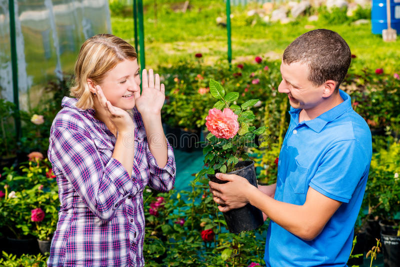 Man chose the best rose in nursery for a girl. Man chose the best rose in the nursery for a girl stock photo