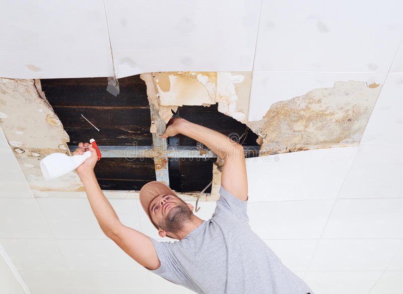 Man Cleaning Mold On Ceiling.Ceiling Panels Damaged Huge ...