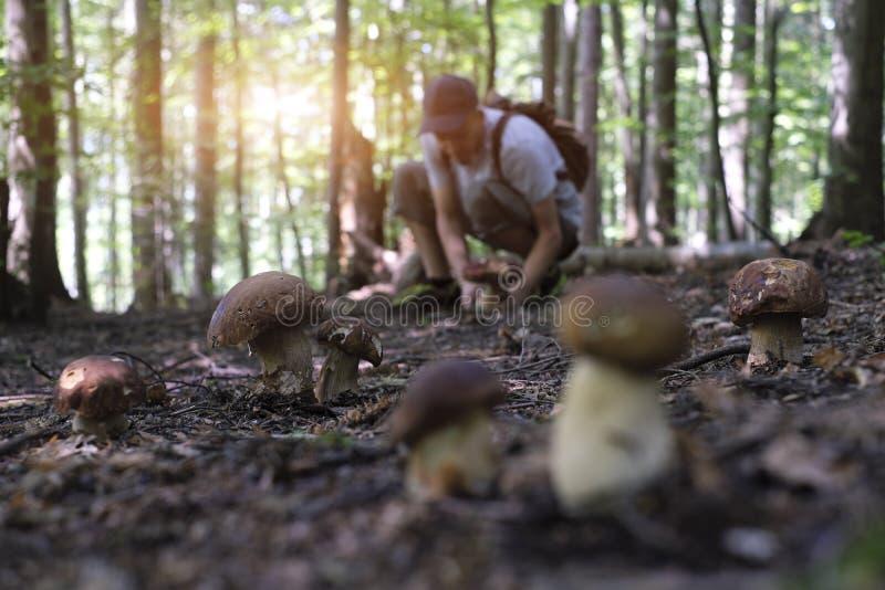 Man collect mushrooms stock photo
