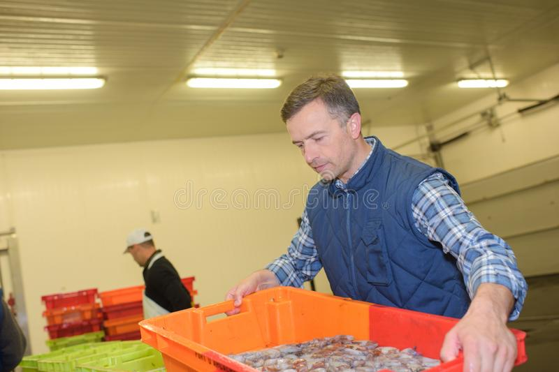 Man with container fresh squid royalty free stock photos