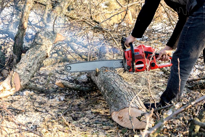 A man cuts a chainsaw trunk and branches of a tree. Rejuvenation of a tree in the winter. Gardening. Firewood royalty free stock images