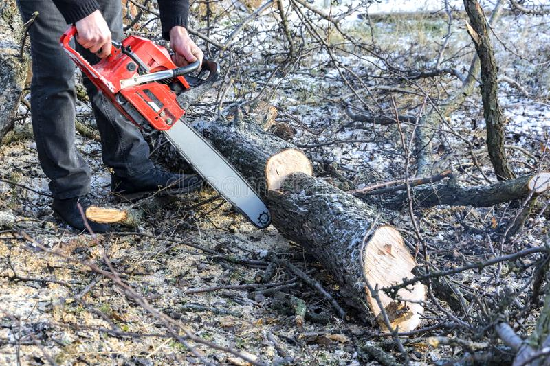 A man cuts a chainsaw trunk and branches of a tree. Rejuvenation of a tree in the winter. Gardening. Firewood stock photos