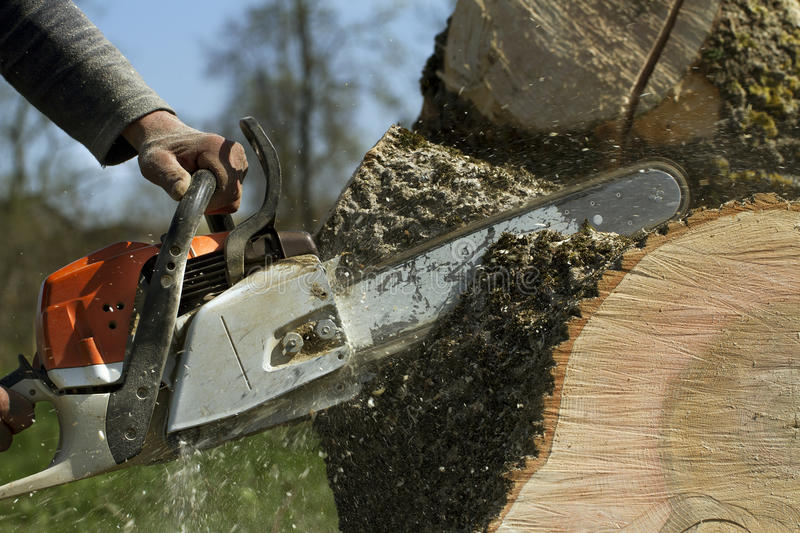 Man cuts a fallen tree. stock photos