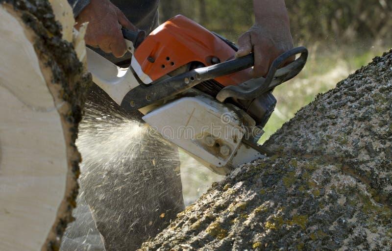 Man cuts a fallen tree. stock photos
