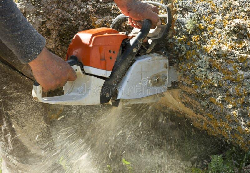 Man cuts a fallen tree. stock image