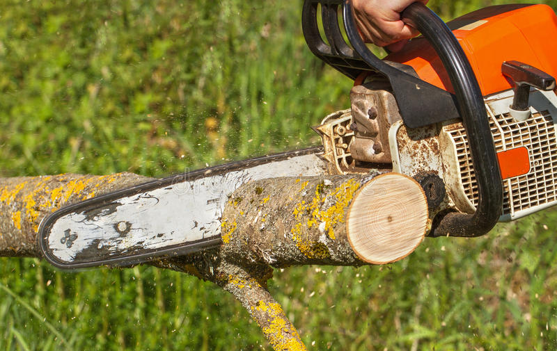 Man cuts a fallen tree. royalty free stock image