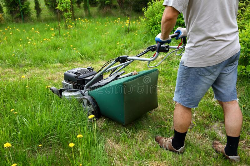 The man cuts the lawn with an combustion mower in the backyard garden. royalty free stock photos