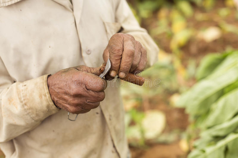 Man cutting a cigar with Cuba's traditional knife stock images