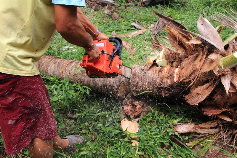 Man cutting coconut trees with a electric chainsaw royalty free stock photo