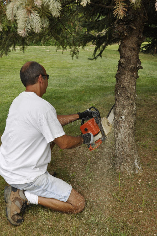 Man cutting down a tree royalty free stock photos