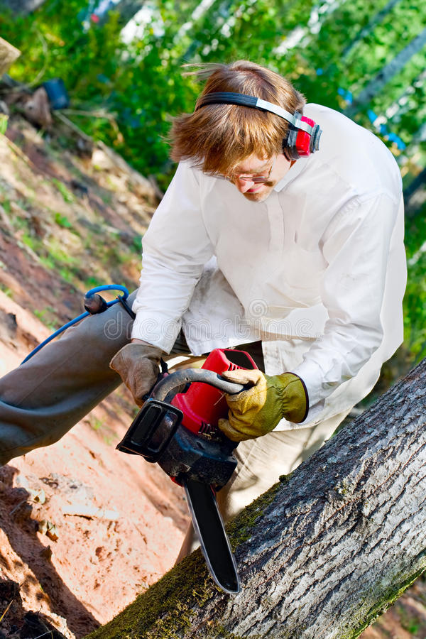 Man cutting down a tree with a chainsaw stock photo