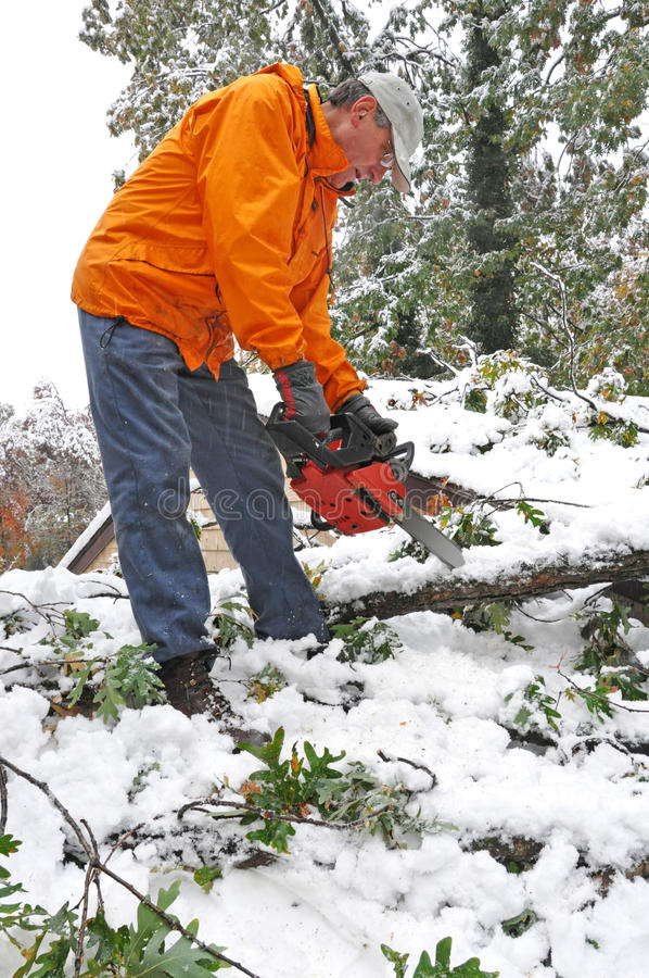 Man cutting fallen tree with chainsaw royalty free stock photo