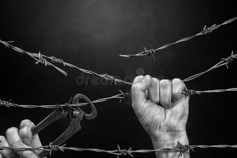 Man is Cutting a Fence. Of Barbed Wire royalty free stock photo