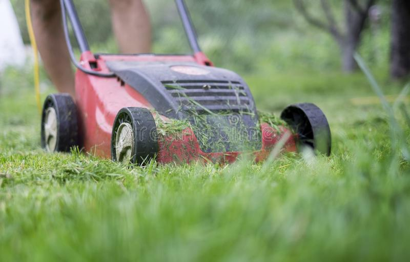 A man cutting the grass with a lawn mower.  stock photo