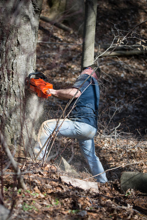 man cutting tree down with chainsaw stock photography