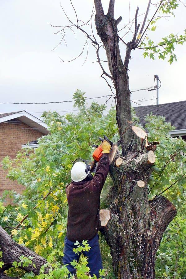 Man cutting tree royalty free stock photo